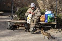 Foto smarrita di 2019 Cat Photographer nuova, gatti svegli della via e un uomo fotografia stock