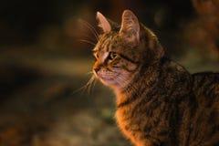 Foto smarrita di 2019 Cat Photographer nuova, gatti svegli della via nella notte immagini stock