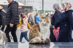 Foto smarrita di 2019 Cat Photographer nuova, gatti svegli della via nella via fotografia stock libera da diritti