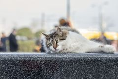 Foto smarrita di 2019 Cat Photographer nuova, gatti svegli della via nella via fotografie stock libere da diritti
