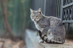 Foto smarrita di 2019 Cat Photographer nuova, gatto grigio sveglio della via fotografia stock libera da diritti