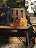 Foto smarrita di 2019 Cat Photographer nuova, gatto lungo sveglio della via del brwon dei peli sedersi sulla sedia fotografie stock libere da diritti