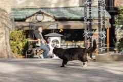 Foto smarrita di 2019 Cat Photographer nuova, gatto nero sveglio immagini stock libere da diritti