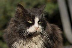Foto smarrita di 2019 Cat Photographer nuova, gatto nero sveglio fotografia stock