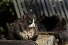 Foto smarrita di 2019 Cat Photographer nuova, gatto nero sveglio immagine stock