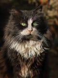 Foto smarrita di 2019 Cat Photographer nuova, gatto nero sveglio fotografia stock libera da diritti