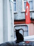 Foto smarrita di 2019 Cat Photographer nuova, gatto nero sveglio della via con la bandiera della Turchia fotografia stock libera da diritti