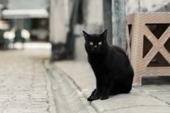 Foto smarrita di 2019 Cat Photographer nuova, gatto nero sveglio della via fotografia stock libera da diritti