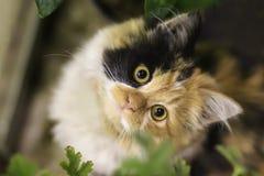 Foto smarrita di 2019 Cat Photographer nuova, gatto smarrito sveglio con i grandi occhi fotografia stock