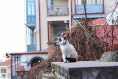Foto smarrita di 2019 Cat Photographer nuova, gatto smarrito sveglio a Tbilisi fotografia stock libera da diritti