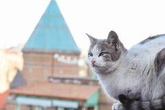 Foto smarrita di 2019 Cat Photographer nuova, gatto smarrito sveglio a Tbilisi fotografie stock