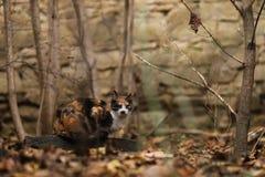 Foto smarrita di 2019 Cat Photographer nuova, gatto sveglio immagini stock libere da diritti