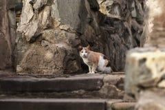 Foto smarrita di 2019 Cat Photographer nuova, gatto sveglio fotografie stock