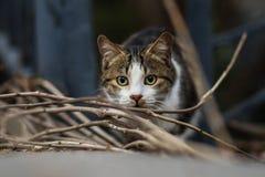 Foto smarrita di 2019 Cat Photographer nuova, gatto sveglio immagine stock