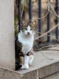 Foto smarrita di 2019 Cat Photographer nuova, gatto sveglio fotografia stock libera da diritti