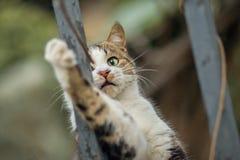 Foto smarrita di 2019 Cat Photographer nuova, gatto sveglio fotografie stock libere da diritti