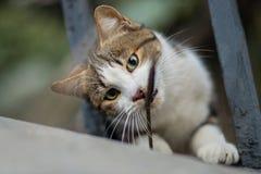 Foto smarrita di 2019 Cat Photographer nuova, gatto sveglio fotografia stock