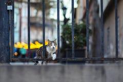 Foto smarrita di 2019 Cat Photographer nuova, gatto sveglio immagini stock