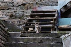 Foto smarrita di 2019 Cat Photographer nuova, gatto sveglio della via immagini stock
