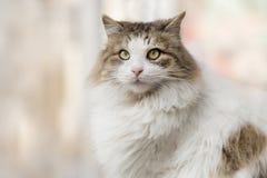 Foto smarrita di 2019 Cat Photographer nuova, gatto sveglio della via immagine stock libera da diritti