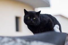 Foto smarrita di 2019 Cat Photographer nuova, gatto sveglio della via fotografie stock libere da diritti