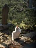 Foto smarrita di 2019 Cat Photographer nuova, gatto sveglio della via fotografie stock