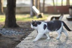 Foto smarrita di 2019 Cat Photographer nuova, gatto sveglio della via fotografia stock