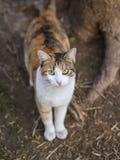 Foto smarrita di 2019 Cat Photographer nuova, gatto sveglio della via fotografia stock libera da diritti