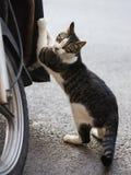 Foto smarrita di 2019 Cat Photographer nuova, gatto sveglio della via immagini stock libere da diritti
