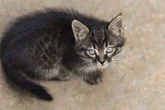 Foto smarrita di 2019 Cat Photographer nuova, piccolo gatto grigio sveglio immagine stock libera da diritti