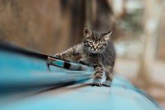 Foto smarrita di 2019 Cat Photographer nuova, piccolo gatto grigio sveglio fotografie stock libere da diritti