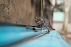 Foto smarrita di 2019 Cat Photographer nuova, piccolo gatto grigio sveglio immagine stock