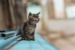 Foto smarrita di 2019 Cat Photographer nuova, piccolo gatto grigio sveglio fotografie stock