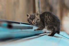 Foto smarrita di 2019 Cat Photographer nuova, piccolo gatto grigio sveglio fotografia stock libera da diritti
