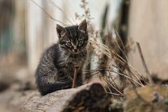 Foto smarrita di 2019 Cat Photographer nuova, piccolo gatto grigio sveglio immagini stock