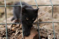 Foto smarrita di 2019 Cat Photographer nuova, piccolo gatto nero sveglio immagini stock libere da diritti