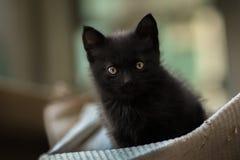 Foto smarrita di 2019 Cat Photographer nuova, piccolo gatto nero sveglio fotografia stock libera da diritti