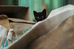 Foto smarrita di 2019 Cat Photographer nuova, piccolo gatto nero sveglio fotografia stock