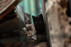 Foto smarrita di 2019 Cat Photographer nuova, piccolo gatto nero sveglio immagine stock libera da diritti