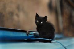 Foto smarrita di 2019 Cat Photographer nuova, piccolo gatto nero sveglio fotografie stock libere da diritti