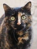 Foto smarrita di 2019 Cat Photographer nuova, ritratto sveglio del gatto della via fotografie stock libere da diritti