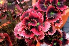 Foto som tas från en trädgård Arkivfoto