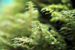 Foto som tas från min trädgård, växt med härliga sidor Royaltyfri Bild