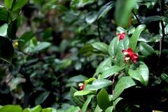 Foto som tas från min trädgård, växt med härliga sidor Arkivfoto