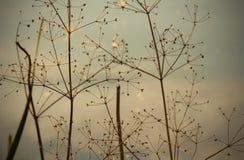 Foto som tas i sommar Dramatiskt och dystert torrt gräs mot ett b arkivfoton