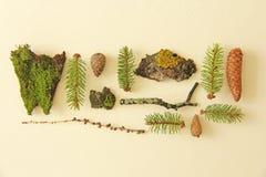 Foto som tas i sommaren Uppsättning av skogbeståndsdelar på ett plant tillbaka Royaltyfri Fotografi