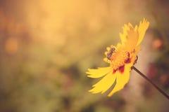 Foto suave de una abeja hermosa y de flores Fotos de archivo libres de regalías