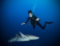 Foto subacquea dell'operatore subacqueo della donna con lo squalo fotografia stock
