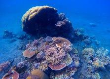 Foto subacuática del arrecife de coral El bucear en las zonas tropicales foto de archivo