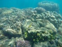 Foto subacuática del coral y de un pescado del plata y amarillo Fotos de archivo